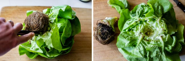 how to core butter lettuce for lettuce wraps